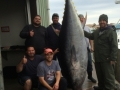 Giant Bluefin tuna fishing charters Gloucester, MA
