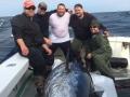 giant bluefin tuna fishing karen lynn charters Gloucester, MA