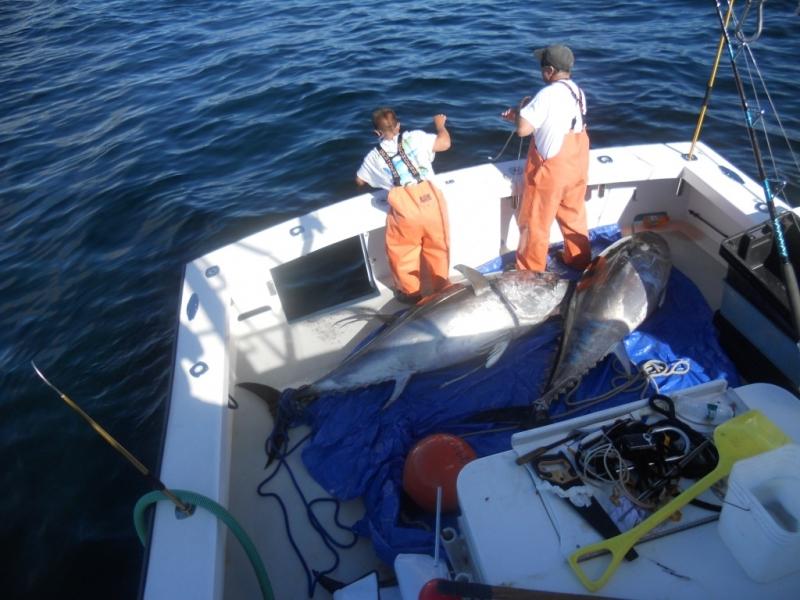 Giant bluefin tuna fishing archives fishing charters for Tuna fishing trips