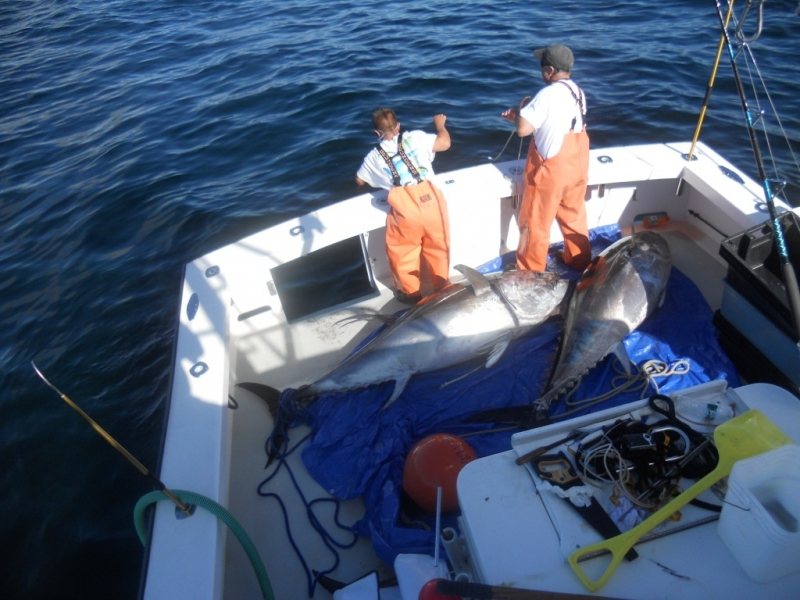 Giant Bluefin Tuna Fishing Karen Lynn Charters Gloucester MA