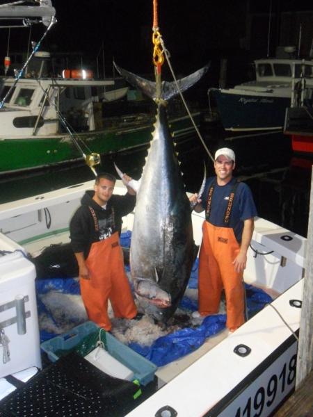 Giant Tuna Fishing Karen Lynn Charters Gloucester MA