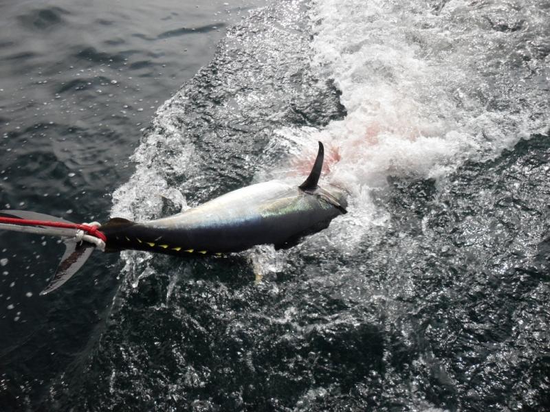 Tuna Fishing Karen Lynn Charters Gloucester MA