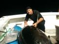 karen lynn charters gloucester, ma tuna fishing