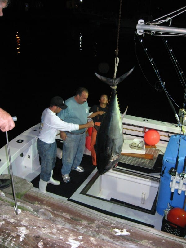 karen lynn charters,bluefin tuna,fishing,gloucester,massachusetts