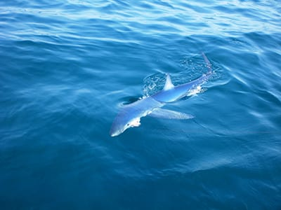 Fishing Charters Gloucester MA Shark Fishing
