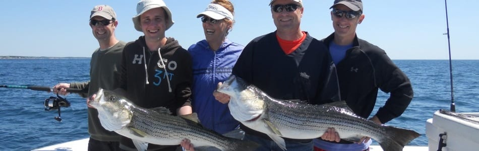 Striped Bass Fishing Karen Lynn Charters Gloucester MA