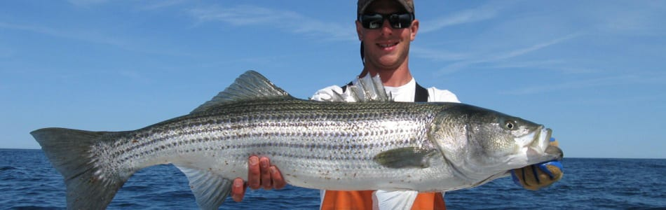 striped bass charter gloucester