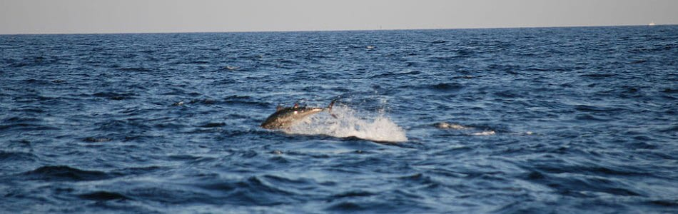 Tuna Fishing Charters Gloucester Massachusetts Karen Lynn