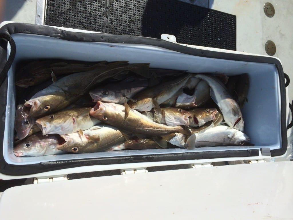 Karen Lynn charters, cod, haddock, Gloucester, Massachusetts