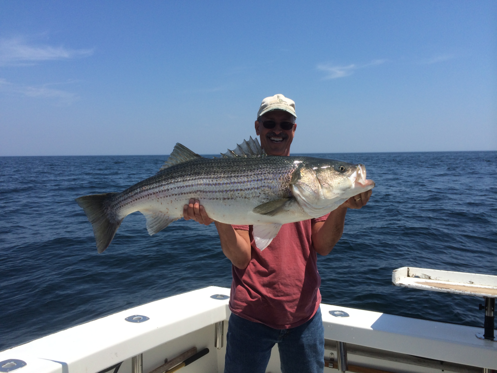 karen lynn charters gloucester, ma striped bass fishing