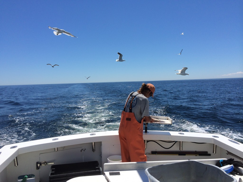 Karen Lynn Charters, Gloucester, MA, Striped Bass, Fishing