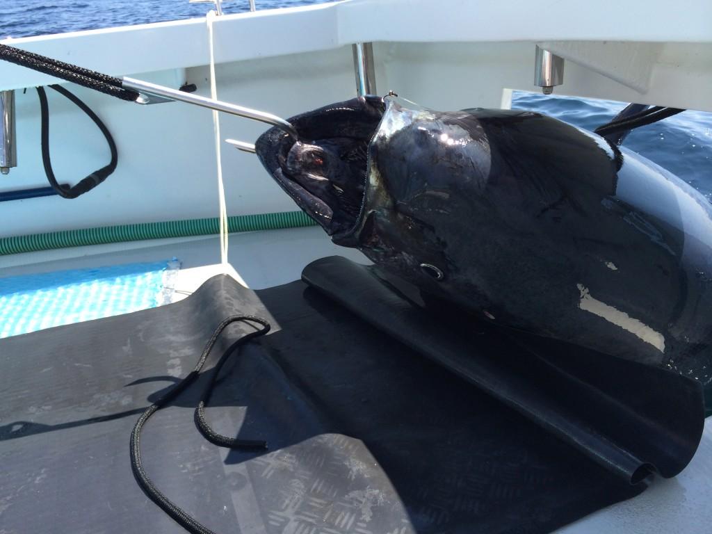 Karen Lynn Charters, Gloucester, MA, Blue Fin Tuna, Fishing