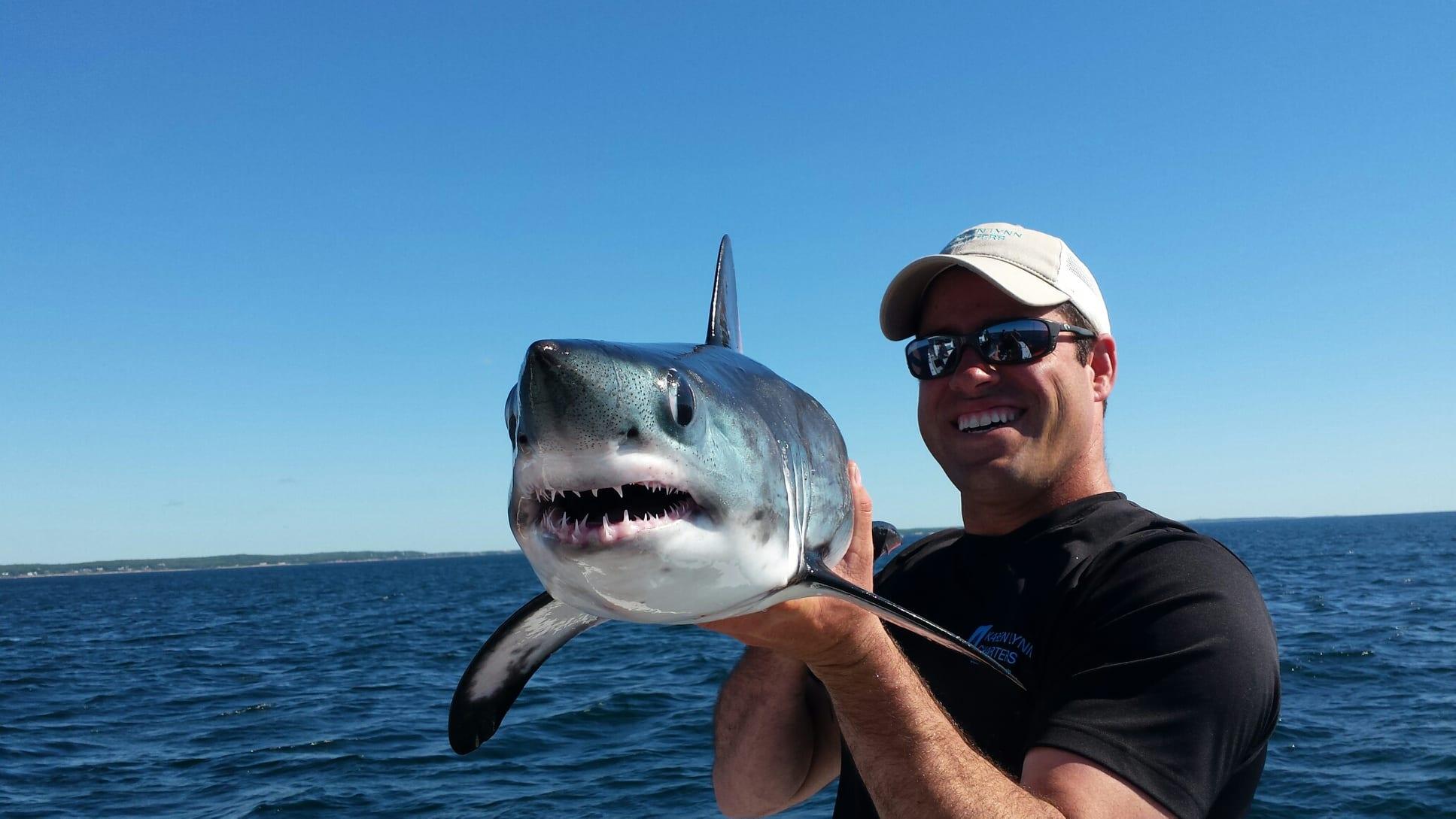 ловля акулы картинки неё готовлю разные