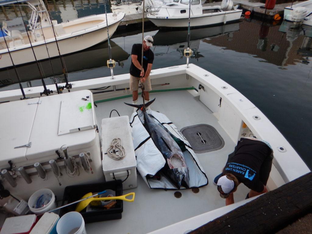 Gloucester, MA bluefin tuna fishing Karen Lynn Charters